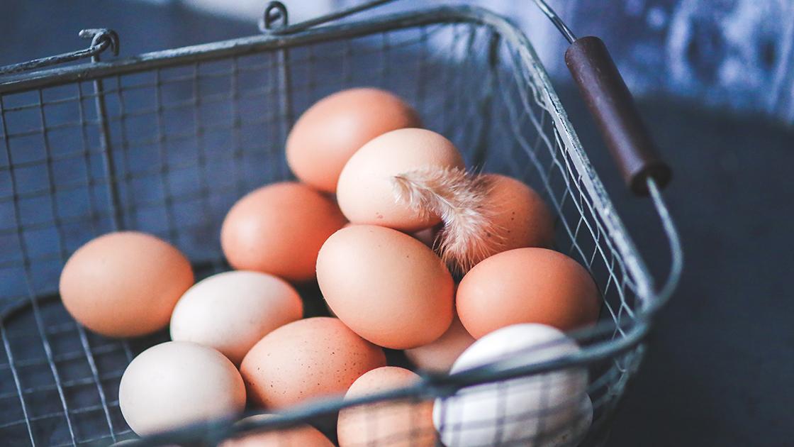 Ali jeste jajca?